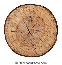 Wood texture of cutted tree trunk vector file