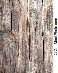 wood texture - texture of old crannied wood