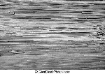 Wood Texture - Texture of Wood