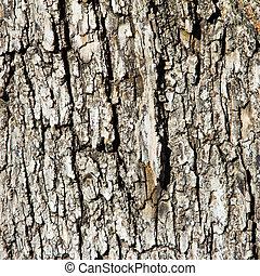 Wood Tree Bark Background Texture