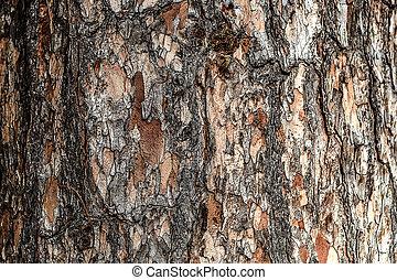 Wood tree bark texture background