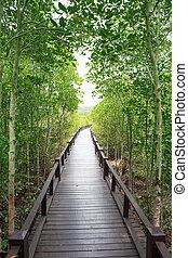 wood way bridge in natural mangrove forest