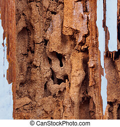 termite damage - wood with termite damage