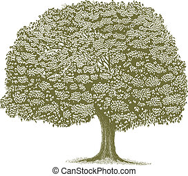 woodcut, árbol