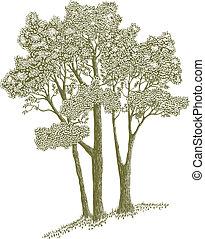 woodcut, árboles