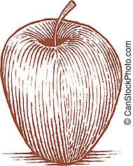 Woodcut style illustration of an apple.
