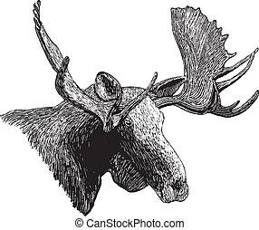 woodcut, cabeça moose