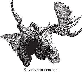 Woodcut Moose Head - Woodcut style illustration of a moose...