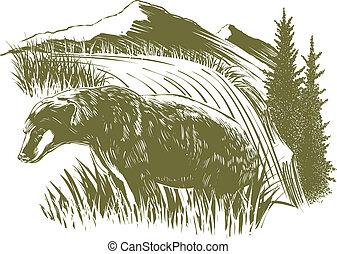 woodcut, orso, scena