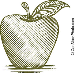 Woodcut Ripe Apple - Woodcut style illustration of an apple.