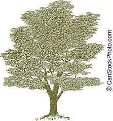 Woodcut Solitary Tree - Woodcut style illustration of a...