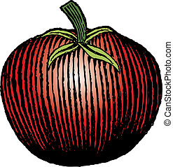 Woodcut Tomato - Woodcut style illustration of a tomato.