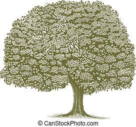 Woodcut Tree - Woodcut style illustration of a single tree.