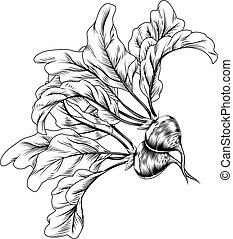 woodcut, vendimia, abeja, retro, rábano, o