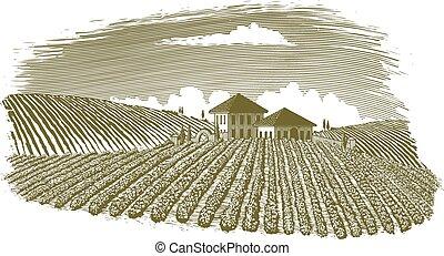 Woodcut Vineyard Landscape - Woodcut-style illustration of a...