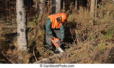 Woodcutter, forest worker, chainsaw - Forest worker at work...