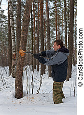 The man cuts a dry tree in wood for a fire