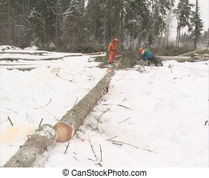 woodcutter work snow tree - uniformed woodcutters cut...