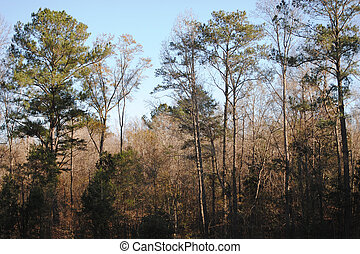 Wooded countryside in Alabama, USA, in winter.