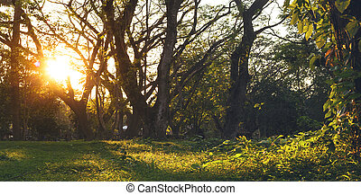 Wooded forest trees backlit by golden sunlight before sunset.