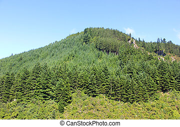 wooded hill on a sunny summer day