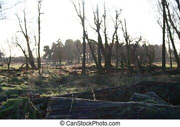 Wooded Landscape - Wooded landscape