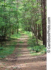 Wooded path and tall pine trees