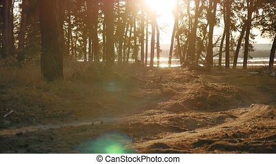 Wooded Pine forest landscape silhouette trees backlit by...