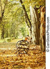 wooden bíróság, alatt, ősz, liget
