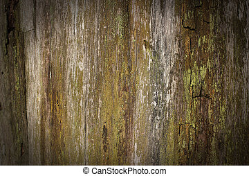 wooden background - tree trunk texture