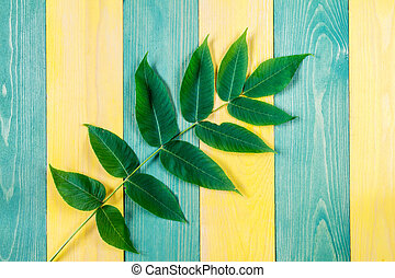 Wooden background with green plant