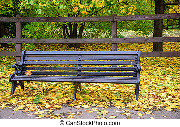 Wooden bench and grass covered with autumn golden leaves with wooden fence and green trees and bushes on background in the park