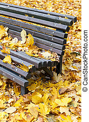 Wooden bench in autumn park