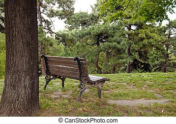 Wooden bench in park