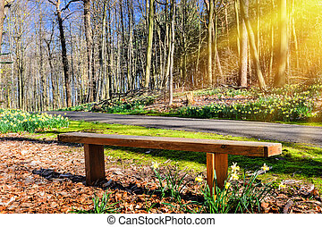 Wooden bench in sunny spring park