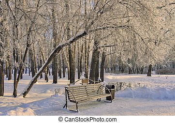 Wooden bench in the winter city park at sunny day