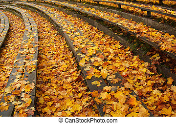 Wooden benches covered by autumn leaves