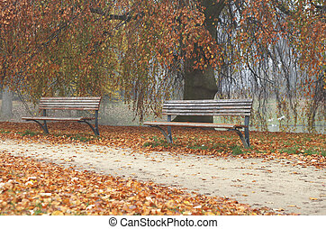 Wooden benches in park in fall