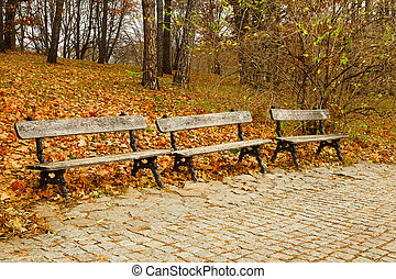 Wooden benches in the park in autumn season