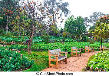 Wooden benchs in a beautiful park garden