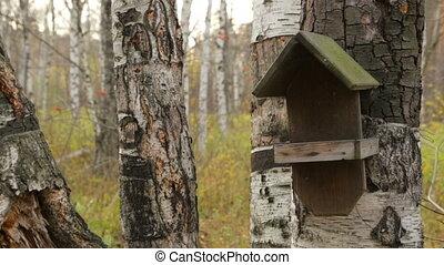 Wooden bird house on birch