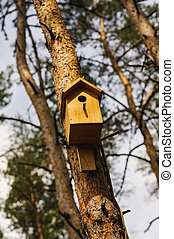 wooden Birdhouse hang on a pine tree