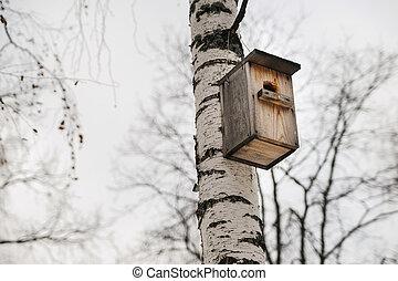 wooden Birdhouse hang on birch tree