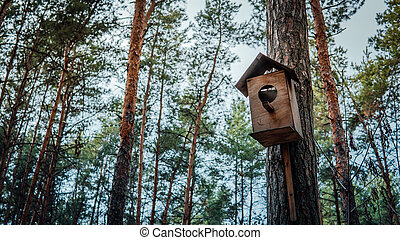 Wooden birdhouse hanging on tree in forest. Close-up of house for birds on branch of tree trunk.