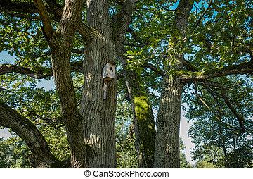Wooden birdhouse in an oak grove on a summer day