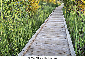 wooden boardwalk across swamp - nature trail over swamp - ...