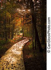Wooden Boardwalk Cuts Through a Dark Autumn Forest