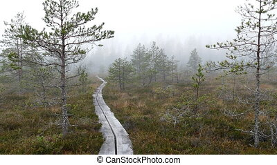 Wooden boardwalk hiking trail through bog land - Foggy day...