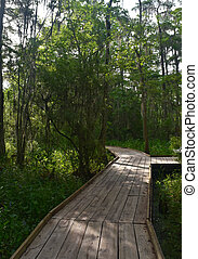 WOoden Boardwalk in the Bayou of Southern Louisiana