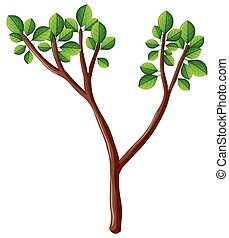 Wooden branch with green leaves